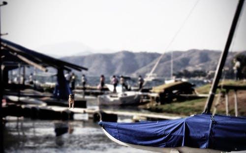 Kostnadsfri bild av sjöar, sjön