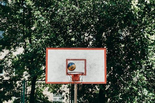 Immagine gratuita di alberi, alto, aro de basquete