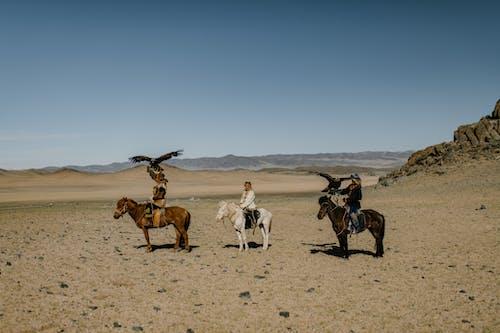 People riding horses along desert terrain