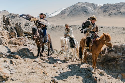 Full body Mongolian horsemen wearing traditional local clothes carrying eagles on hands and riding horses along spacious rocky terrain during eagle hunting