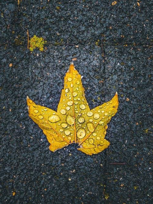 Raindrops on Yellow Leaf