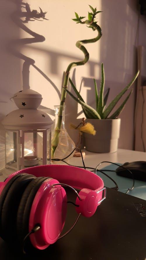 家, 放鬆, 花, 花卉 的 免費圖庫相片