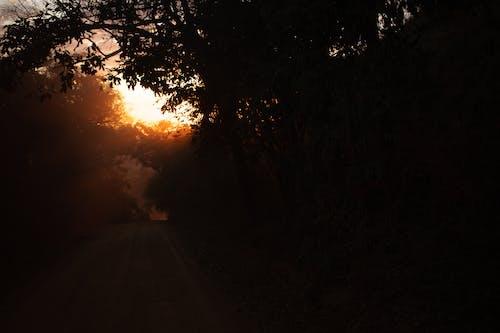 Бесплатное стоковое фото с вечер, дерево, жуткий, закат