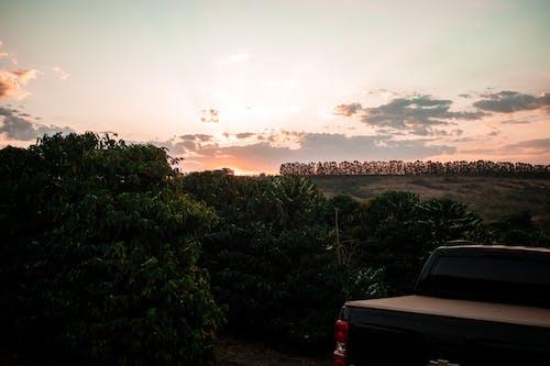 Бесплатное стоковое фото с автомобиль, вечер, вода, дерево