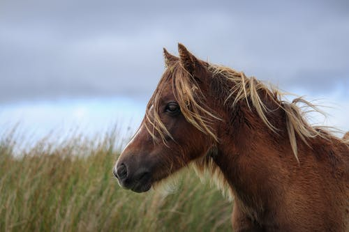 Side view of graceful horse with light brown mane standing on grassy meadow against clouds