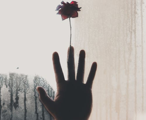 Unrecognizable person touching window with flower behind