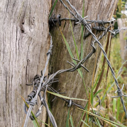 Free stock photo of barbed wire, brown, meadow, metal