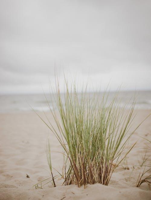 Ảnh lưu trữ miễn phí về ban ngày, bão táp, bầu trời, bên bờ biển