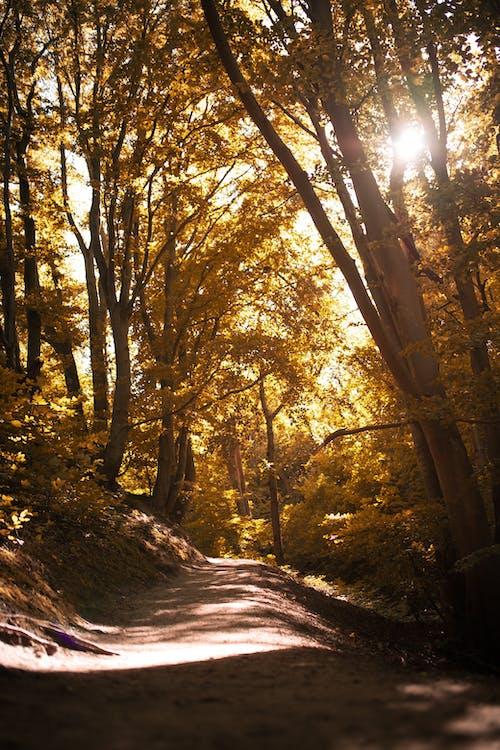 Walkway among autumnal trees on sunny day
