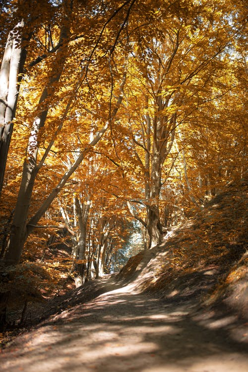 Picturesque landscape of pathway amidst lush trees with golden leaves in autumn forest on sunny day