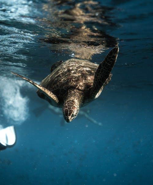 Turtle swimming underwater of blue sea