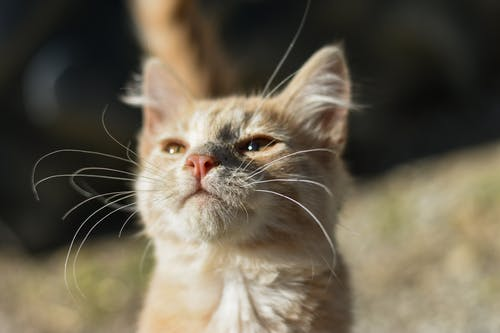 Adorable domestic fluffy kitten smelling air and squinting and on blurred background of nature