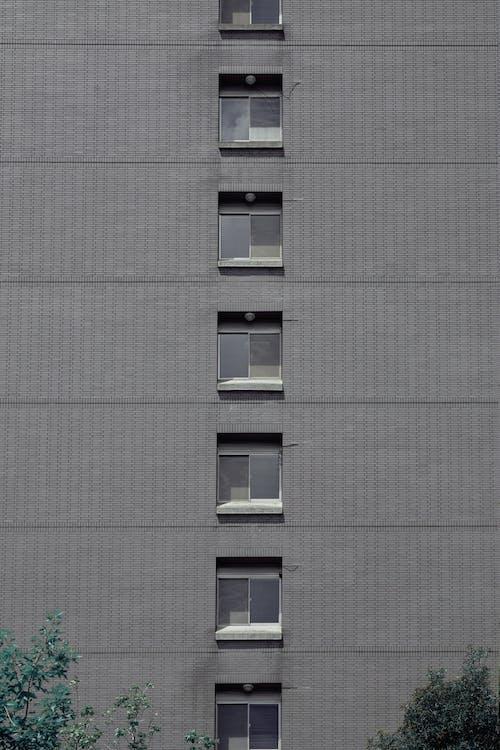 Imagine de stoc gratuită din afaceri, apartament, arbore, arhitect