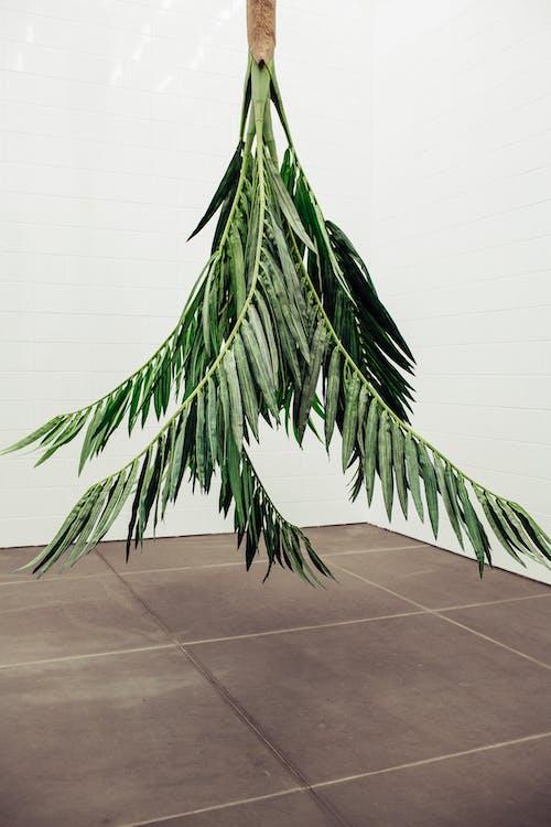 Fotos de stock gratuitas de árbol, blanco, color, crecimiento