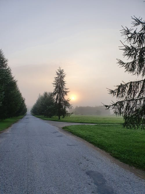Free stock photo of early sunrise, foggy morning, forest
