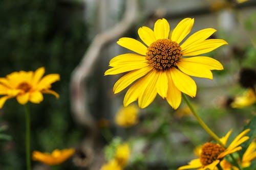 Free stock photo of blooming flowers, flower, flower garden, garden