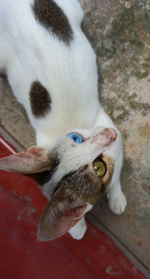 kedi gözü içeren Ücretsiz stok fotoğraf