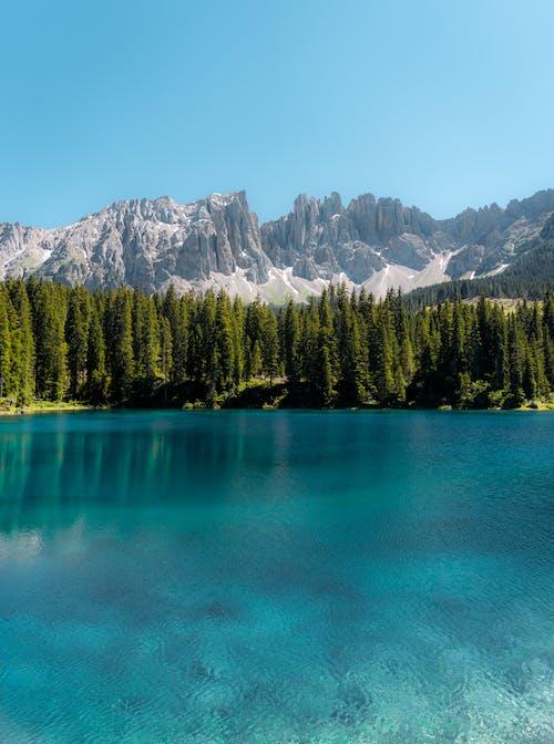 Pinos Verdes Cerca Del Lago Y La Montaña
