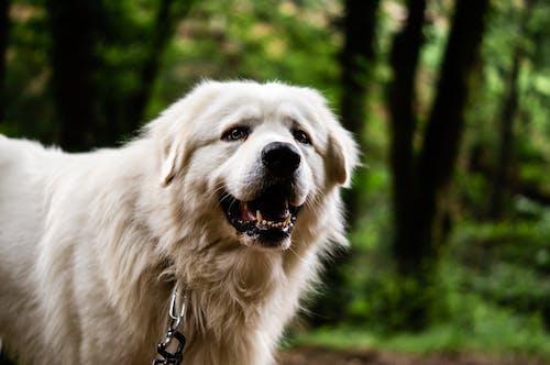 Close-Up Shot of White Dog