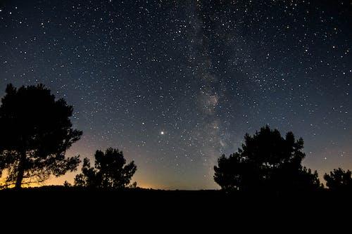 Imagine de stoc gratuită din arbore, astronomie, Calea Lactee