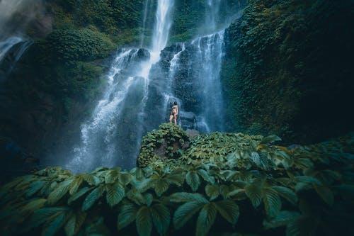 Immagine gratuita di acqua, albero, bali, cascata