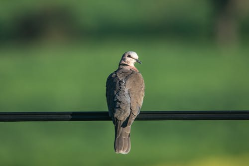 A Dove Perched on a Railing