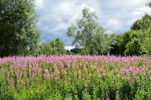 Free stock photo of beautiful, cloudy, day, field