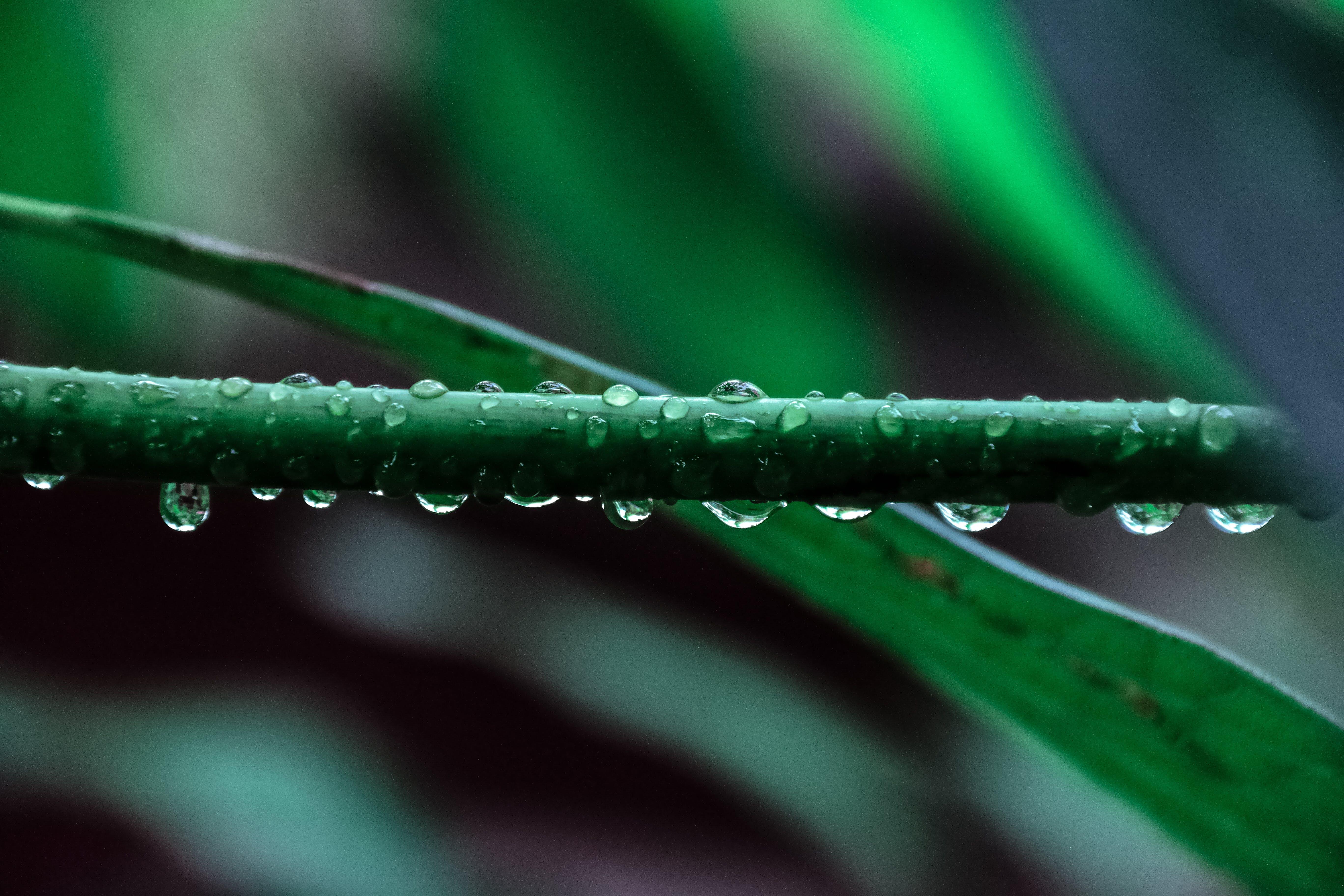 Imagine de stoc gratuită din apă pe frunze, buruieni, iarbă, natură