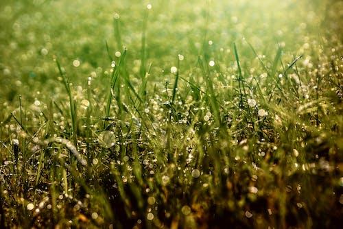 Immagine gratuita di alba, campo, campo di fieno, crescita