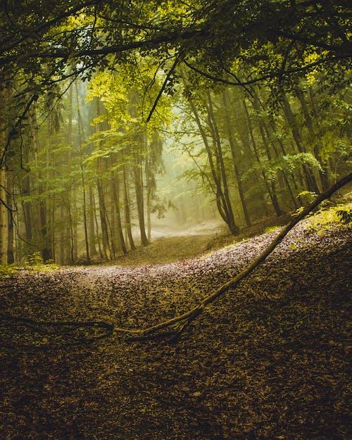 Foto profissional grátis de árvores, exuberante, floresta