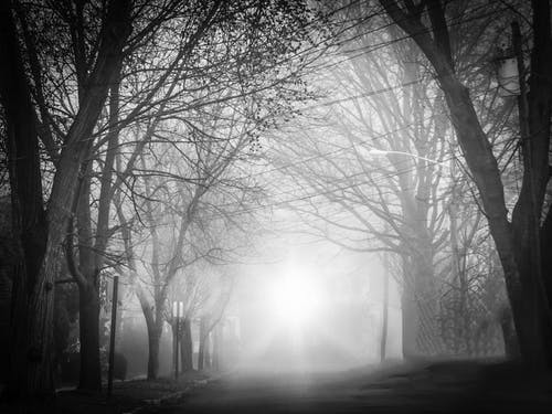 A Road Covered in Mist