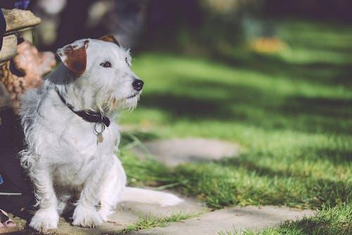 Kostnadsfri bild av gående, hund, husdjur, trädgård