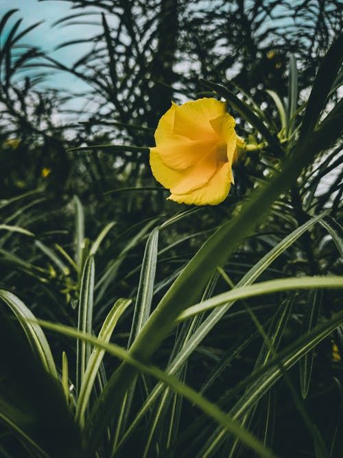 Yellow flower growing in green field with tall grass and plants under blue cloudless sky in summer day