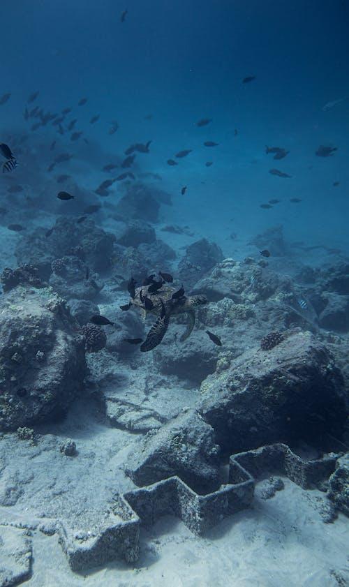 Fish floating near bottom of blue sea