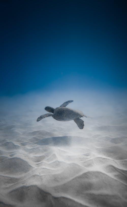 Adorable turtle swimming undersea near sandy bottom