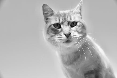 Ảnh lưu trữ miễn phí về chụp ảnh động vật, con mèo, con vật