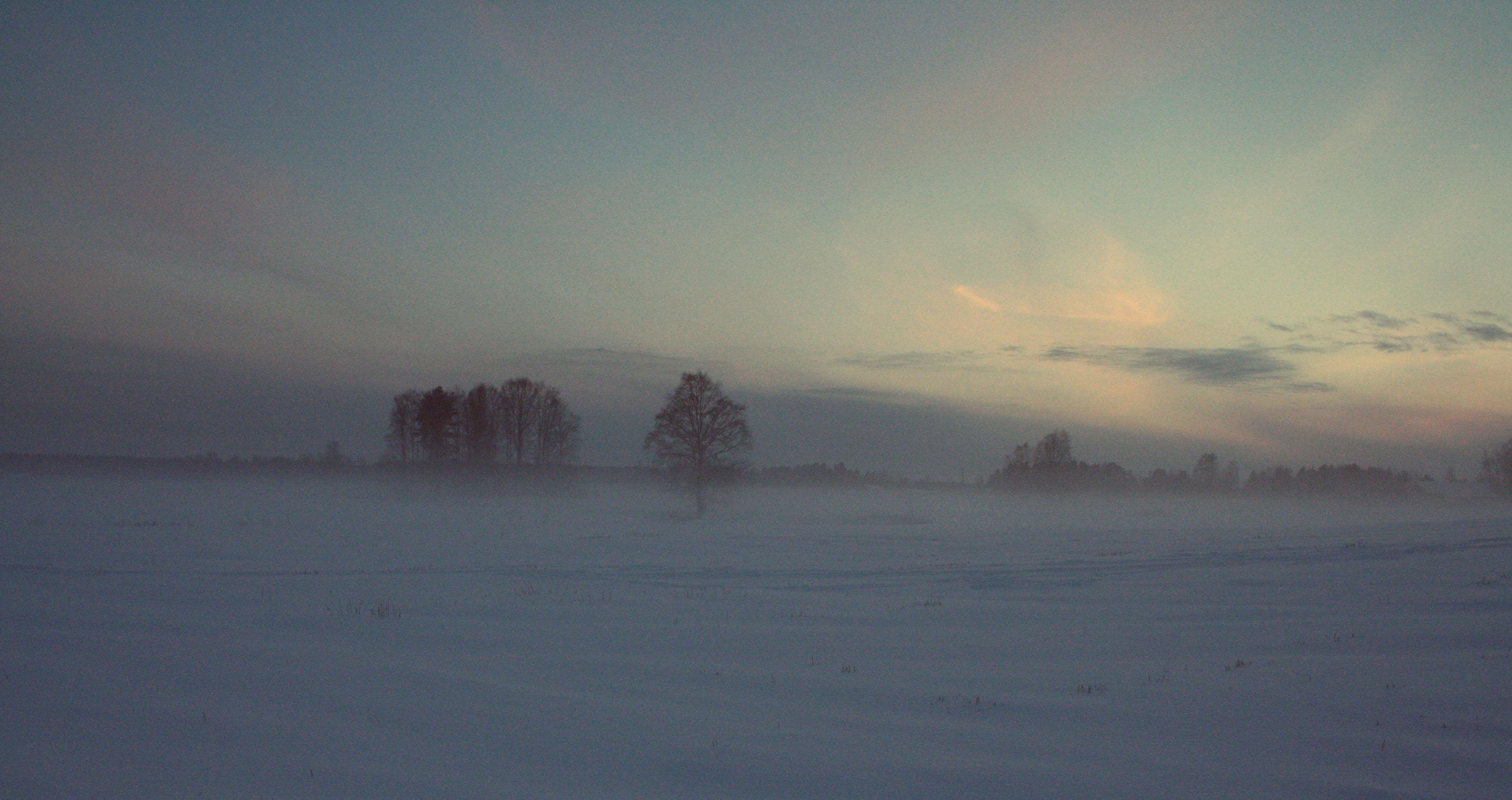 Free stock photo of #winter #nature #snow #fog