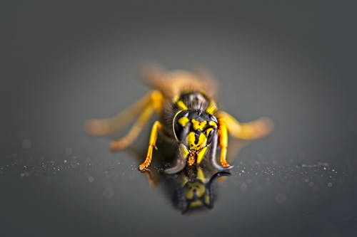 Photos gratuites de guêpe, insecte