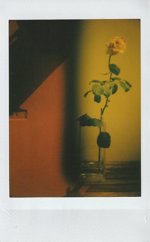 Fotos de stock gratuitas de exposicion doble, filtro de color, flor, foto de la pelicula