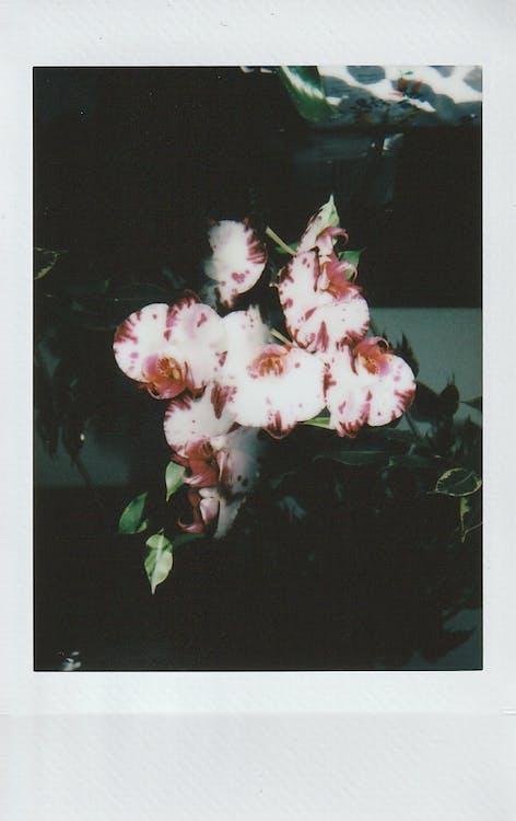 Základová fotografie zdarma na téma dekorace, dvojí expozici, filmová fotografie