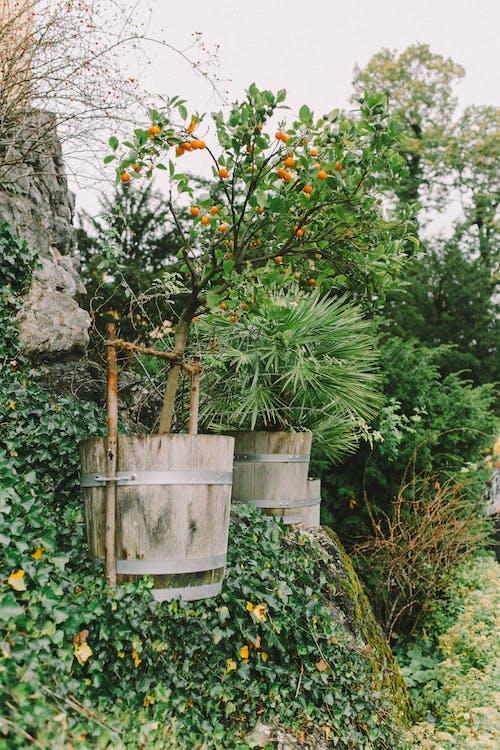 Green Plant on White Wooden Pot
