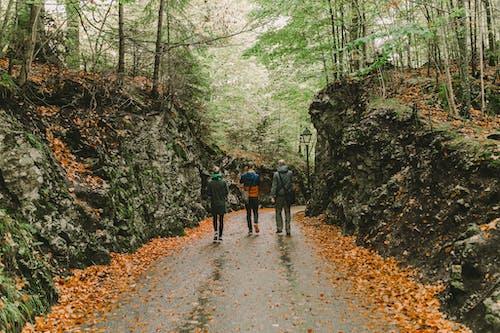 People Walking on Pathway Between Green Trees