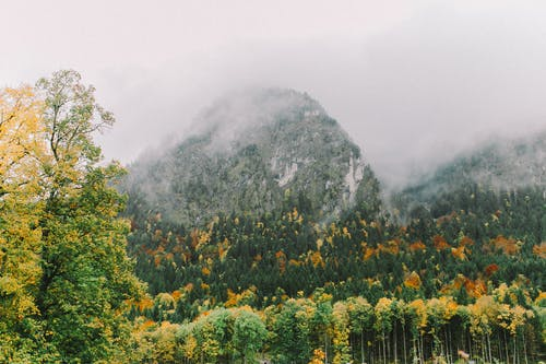Green and Yellow Trees Near Mountain