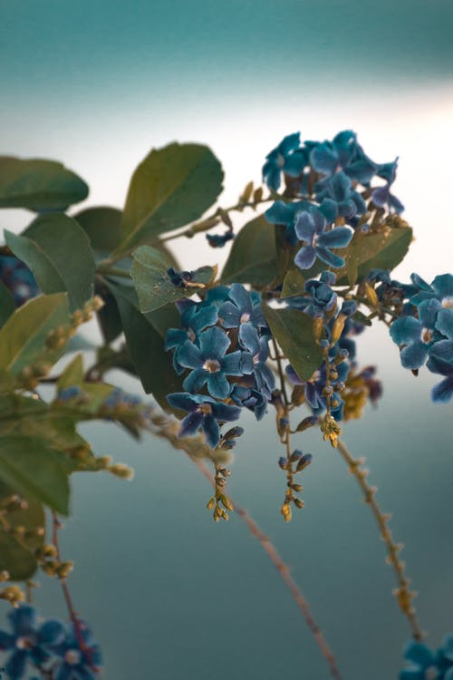 Branch with blooming blue flowers in nature