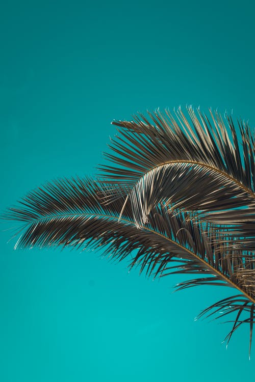 Palm branches growing against cloudless sky
