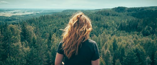 Free stock photo of forest, hair, landscape, panoramic