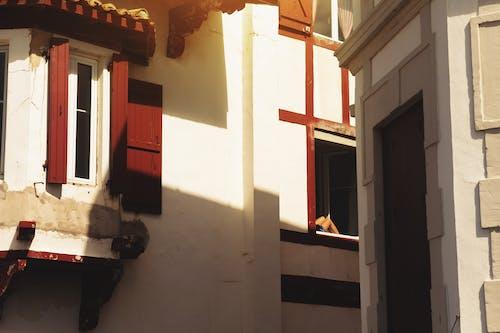 Základová fotografie zdarma na téma exteriér, fasáda, okna, sluneční světlo