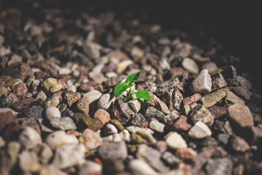 Free stock photo of dry, rocks, leaves, ground