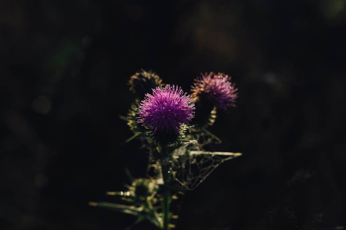 bloeiend, bloem, bloemen