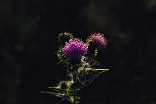 Free stock photo of dark, summer, garden, blur